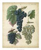 Calwer Grapes I Art Print