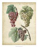 Calwer Grapes II Art Print