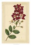 Floral Varieties II Art Print