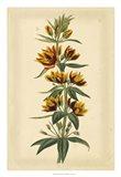 Floral Varieties IV Art Print