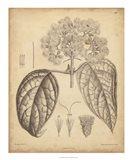 Vintage Curtis Botanical I Art Print