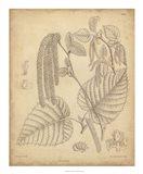 Vintage Curtis Botanical II Art Print