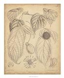 Vintage Curtis Botanical III Art Print
