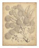 Vintage Curtis Botanical IV Art Print