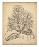 Vintage Curtis Botanical V Art Print