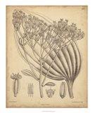 Vintage Curtis Botanical VI Art Print