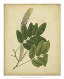 Botanical III Art Print