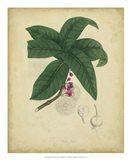 Botanical V Art Print