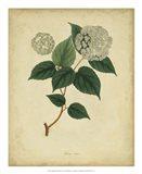 Botanical VI Art Print