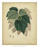 Botanical VII Art Print
