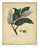 Botanical VIII Art Print