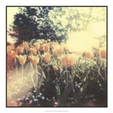 Tulipa Exposta II Art Print