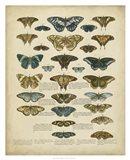 Tabula de Papilio Art Print