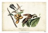 Yellow-billed Cuckoo Art Print