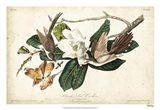 Black-billed Cuckoo Art Print