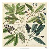 Catesby Leaf Quadrant I Art Print