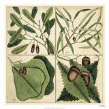 Catesby Leaf Quadrant II Art Print