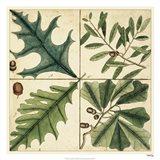 Catesby Leaf Quadrant III Art Print