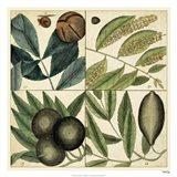 Catesby Leaf Quadrant IV Art Print
