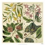 Catesby Botanical Quadrant I Art Print