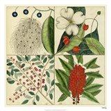 Catesby Botanical Quadrant II Art Print