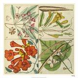 Catesby Botanical Quadrant III Art Print