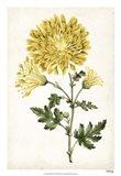 Floral Lace IV Art Print