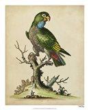 Paradise Parrots I Art Print