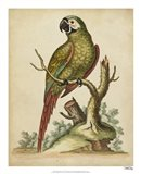 Paradise Parrots II Art Print