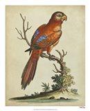 Paradise Parrots III Art Print