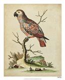 Paradise Parrots IV Art Print