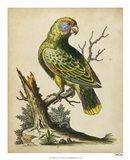 Paradise Parrots V Art Print