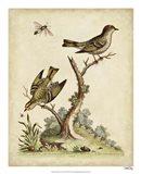 Companions in Nature III Art Print
