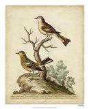 Companions in Nature IV Art Print
