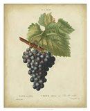 Antique Bessa Grapes I Art Print