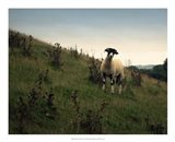 Wooly Friends II Art Print