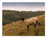 Wooly Friends III Art Print