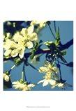 Summer Blossom II Art Print