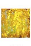 Autumn Photography IV Art Print