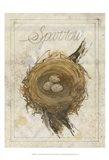Nest - Sparrow Art Print