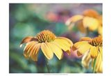 Mellow Yellows II Art Print