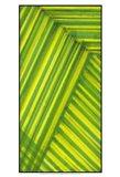 Line Study Green Art Print
