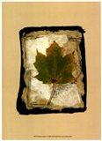 Kyoto Leaves V Art Print
