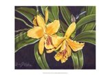 Vibrant Orchid I Art Print