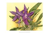 Vibrant Orchid IV Art Print
