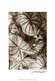 Garden Textures IV Art Print