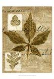 Leaf Collage III Art Print