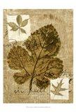 Leaf Collage IV Art Print
