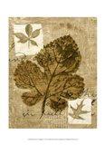 Mini Leaf Collage IV (ST) Art Print