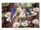 Serenade in Blue Art Print